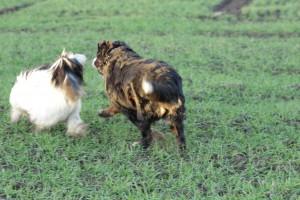 Hobbit und QUINZY Auf dem Feld