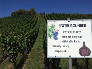 Spaetburgunder